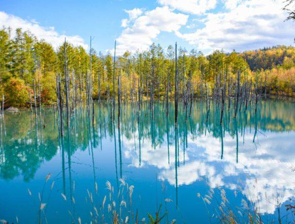 美瑛 青い池の紅葉